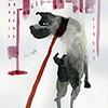 Perros urbanos 5